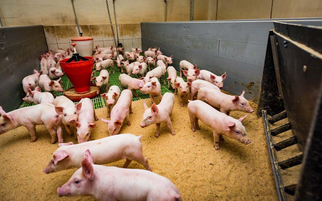 Tierwohl, Klimaschutz und rentables Wirtschaften?
