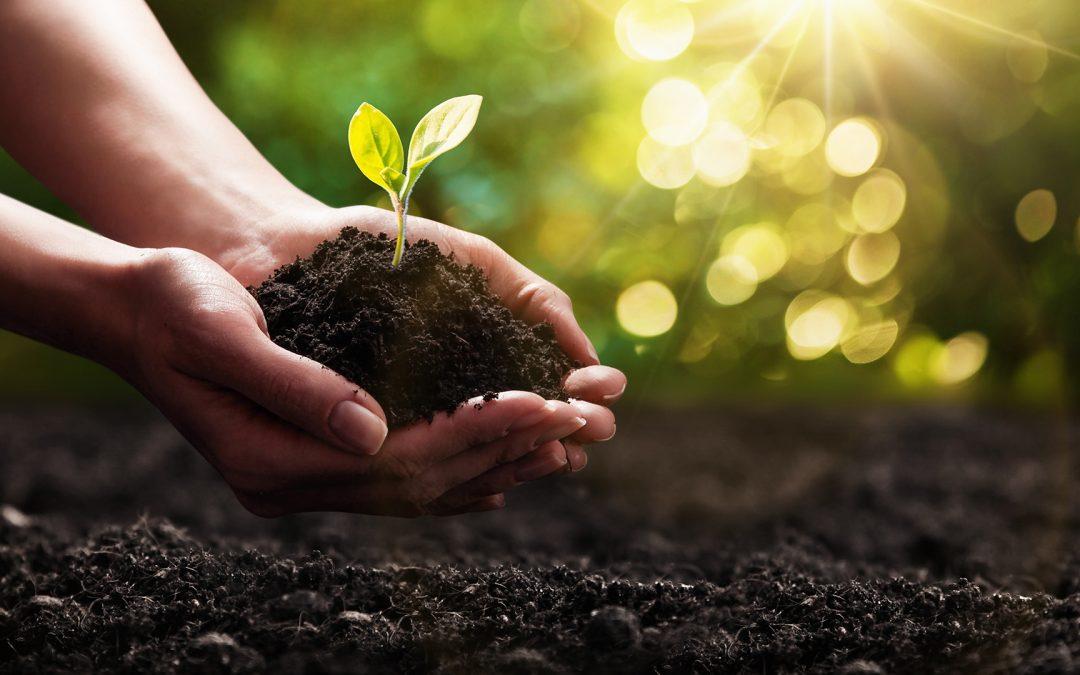 Nachhaltigkeit im Pflanzenbau – klarer Trend
