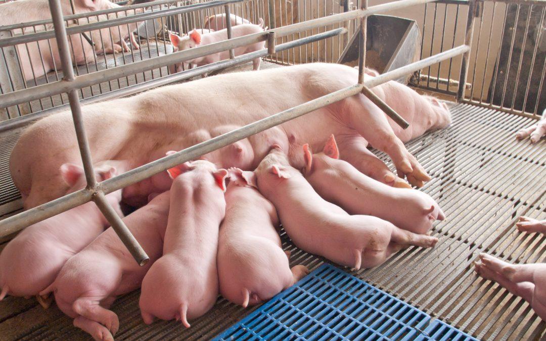 Tierhaltung in Deutschland: Wo geht die Reise 2019 hin?