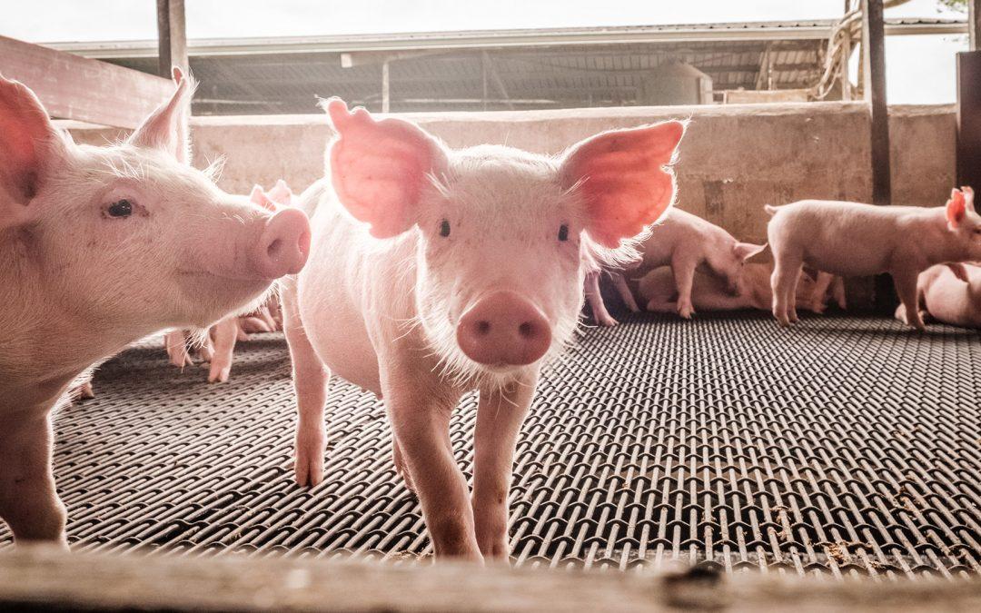 Nachhaltigkeit: wichtiger Faktor in der Tierhaltung